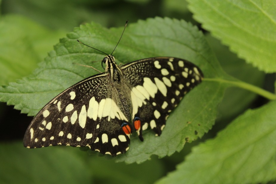 Butterfly farm at St Andrews Botanic Gardens, was so lovely to see all the different kinds so clo...