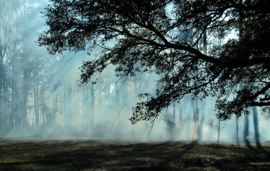 Stumbled upon a controlled burning on an old plantation field in SC.