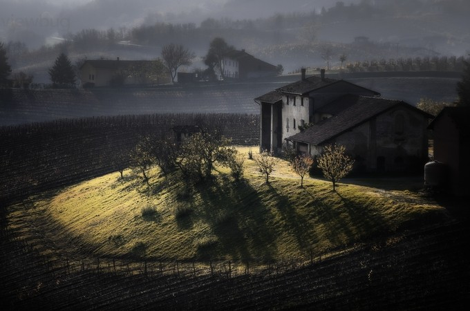 Italian vineyards 4 by livioferrari - Rural Vistas Photo Contest