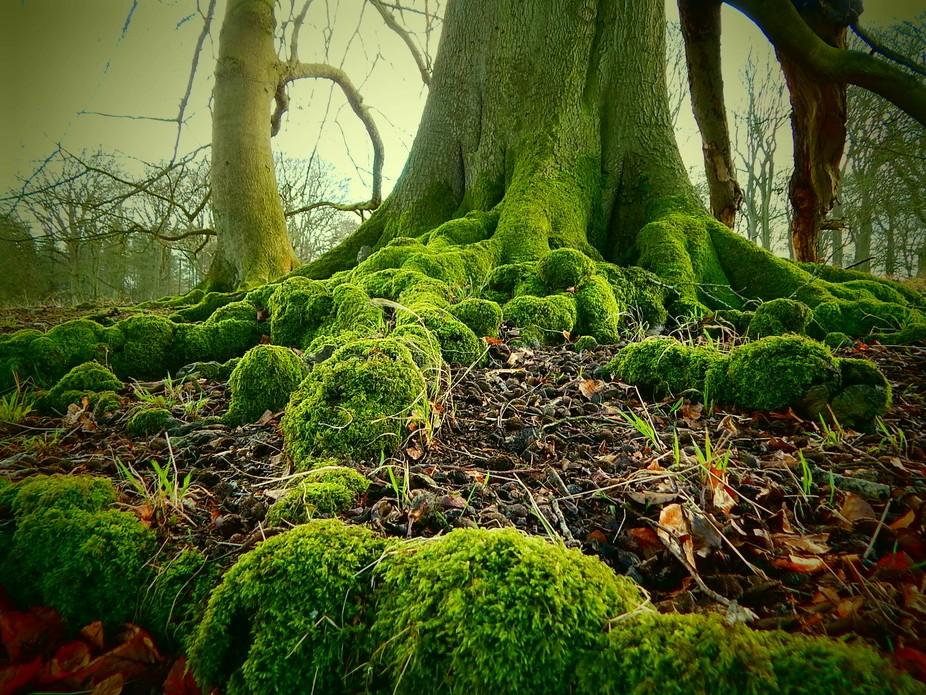 Ferny old tree