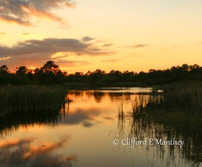 Sunset pond with Gator and turtle watching.