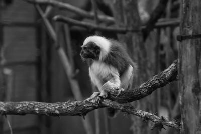 Monkey at the Houston Zoo