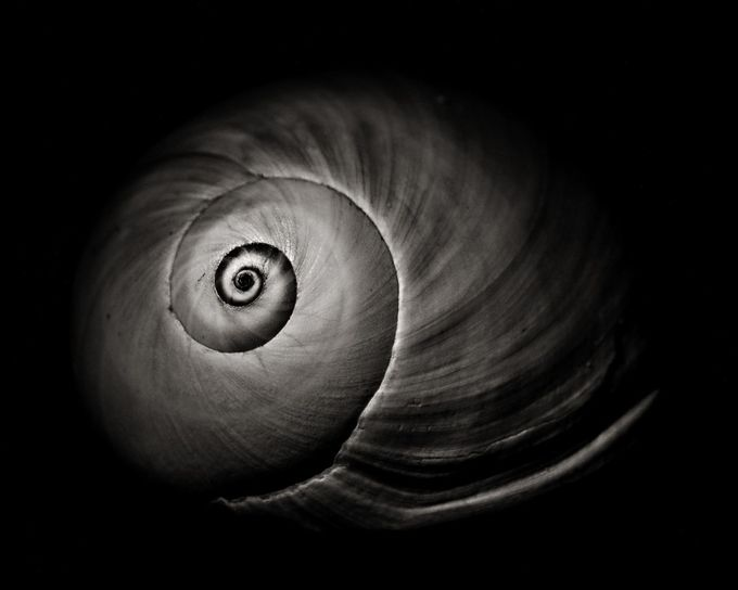 Empty Shell by ericakinsella - Spirals And Composition Photo Contest