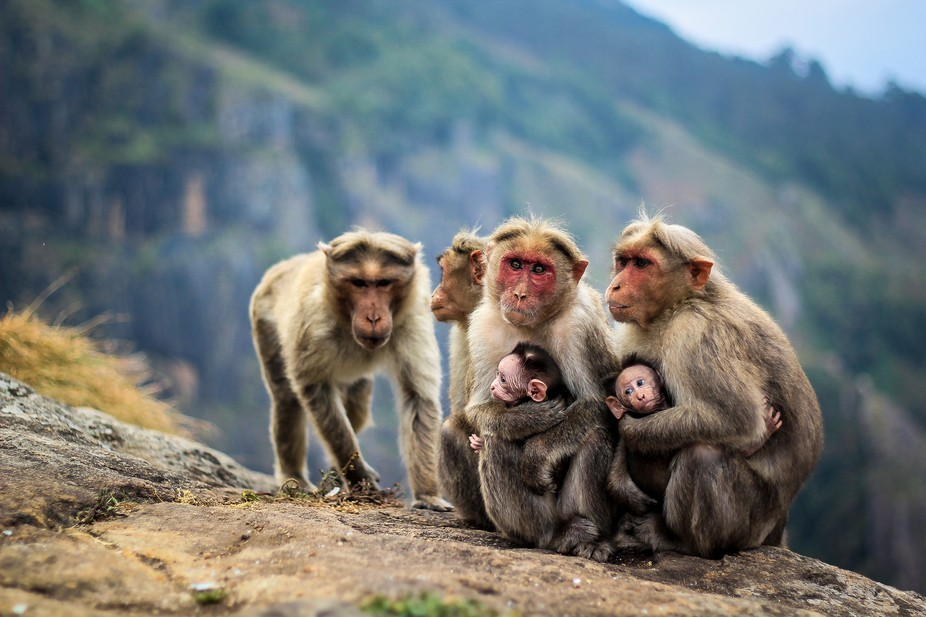 I took this shot of a monkey family while traveling in the south of India.