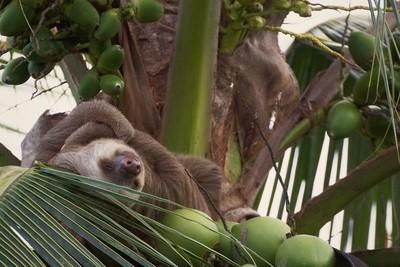 Sloth Siesta