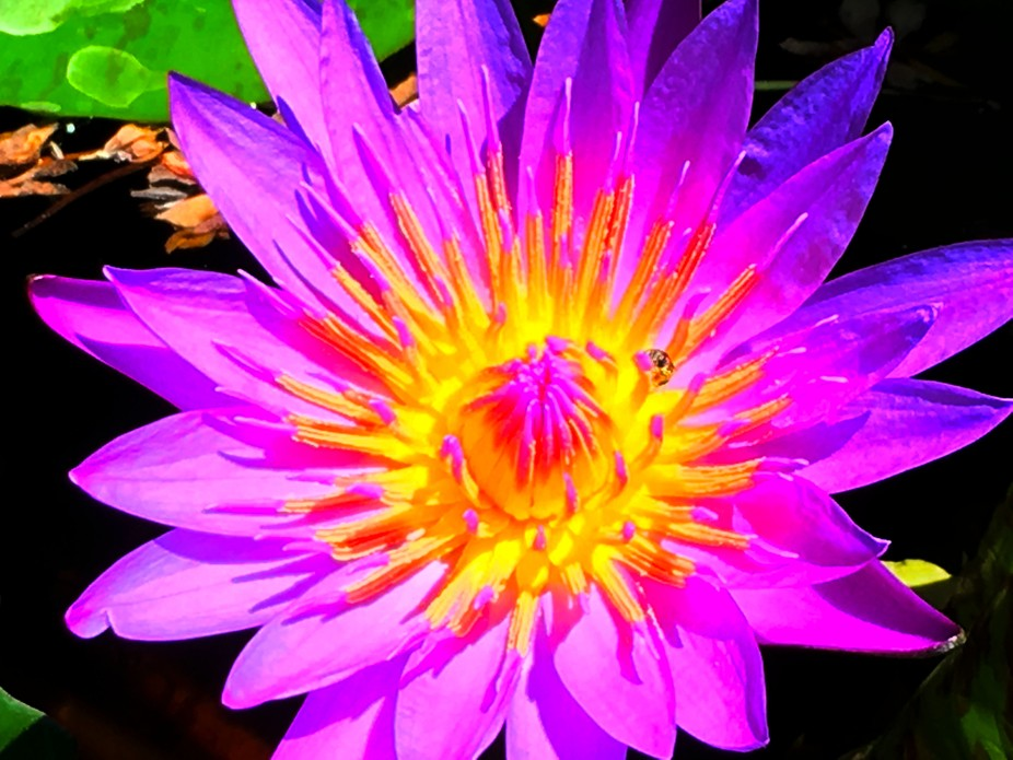 016_The Purple Lilly