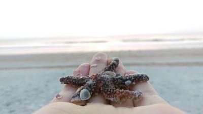 Starfish pt 1