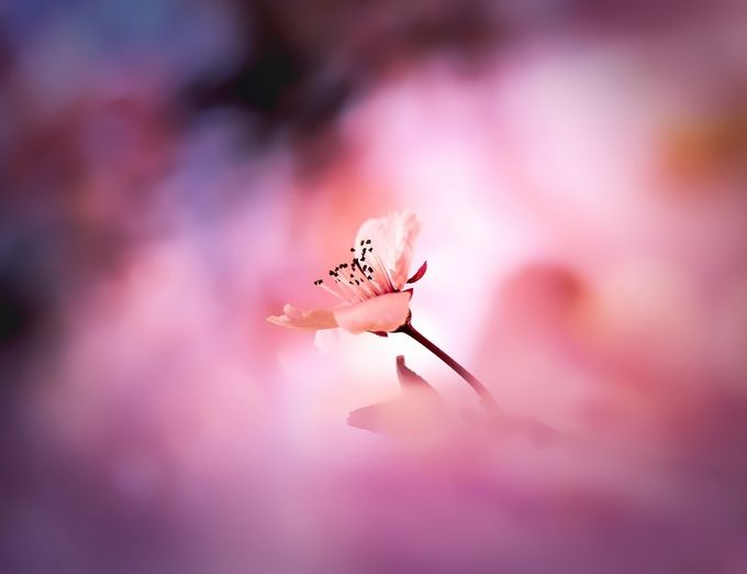 spring painbox by DJLee - Pink Photo Contest
