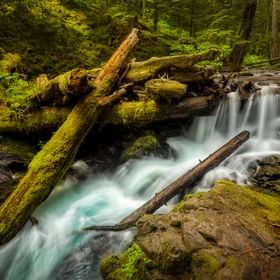 A section of Panther Creek in Washington State just before its waters cascade over Panther Creek Falls is an ideal view of what makes the Pacific...