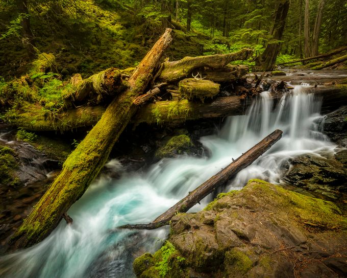 Pacific Northwest at its Best by jfischerphotography - Fallen Trees Photo Contest