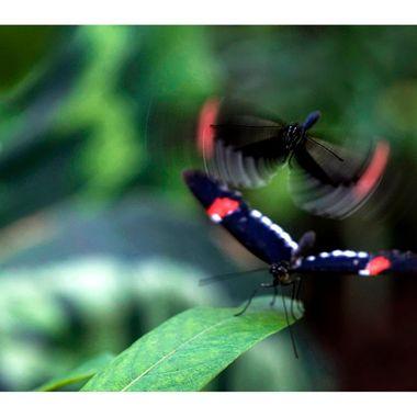 Butterfly 3 copy copy