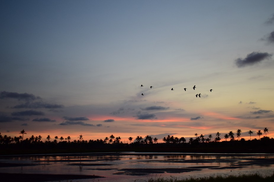 As evening gathered and the sun dipped into the wetlands of South India, the sky became a magnifi...