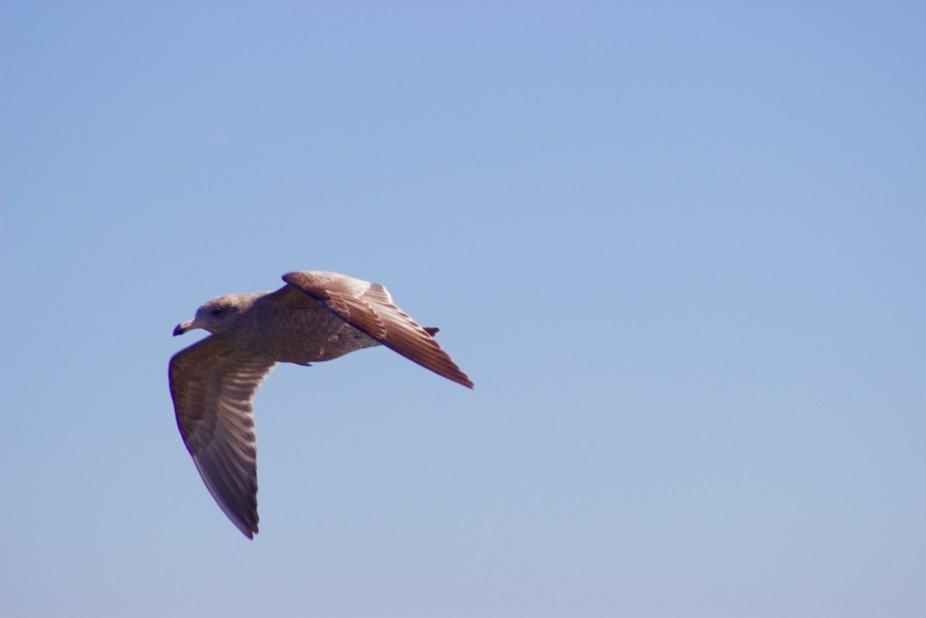 Another Jersey shore bird.