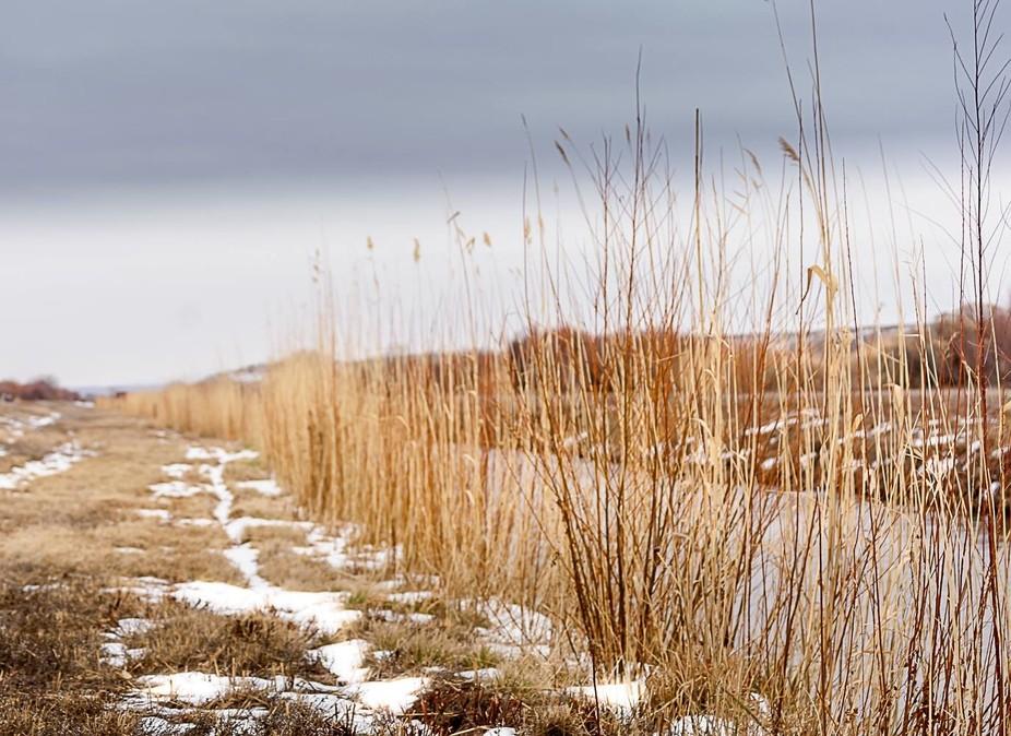 Reeds #2