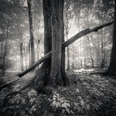 Pierced Tree
