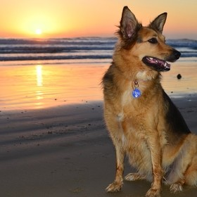 The prettiest dog on the prettiest beach in the world.