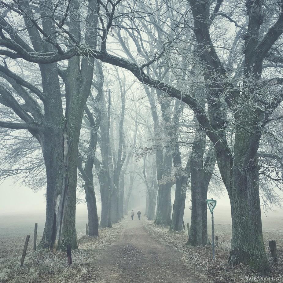 Winter Stroll by Mariko - Tall Trees Photo Contest