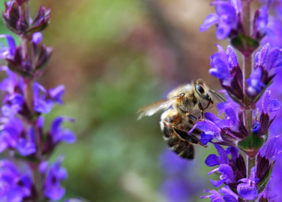 One of my many pictures of bees