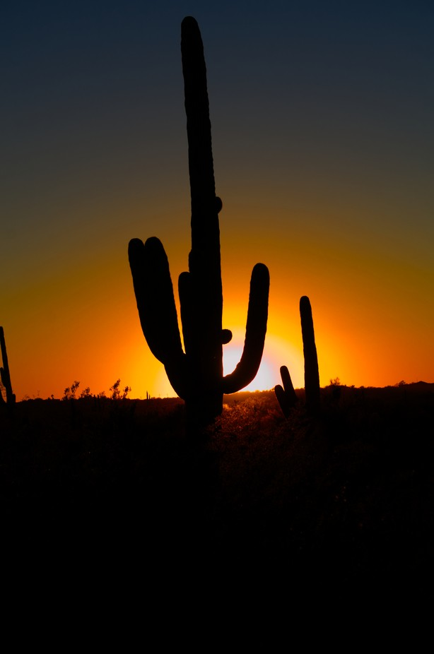 I purposely chose  the location and waited for the sun to set behind the Saguaro Cactus. I wanted the silhouette of the cactus to be dark in contrast to the setting sun. Lens: Nikon 50mm Prime. 40 years old