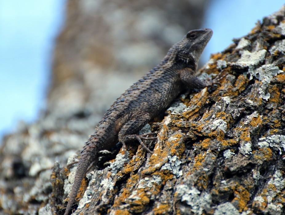 Lizard perching in the sun