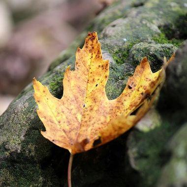 leaf-rocks-FSP 0320