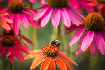 Flowers and a Bee