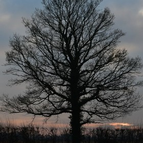 Walking the dog, I often see this tree bathed in a beautiful sunset