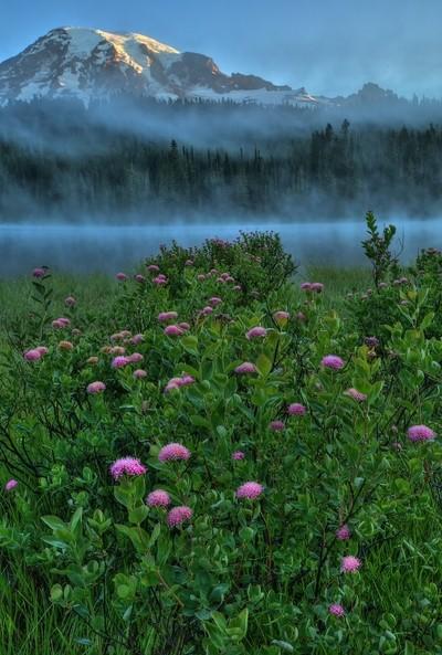 Mt Rainier pink