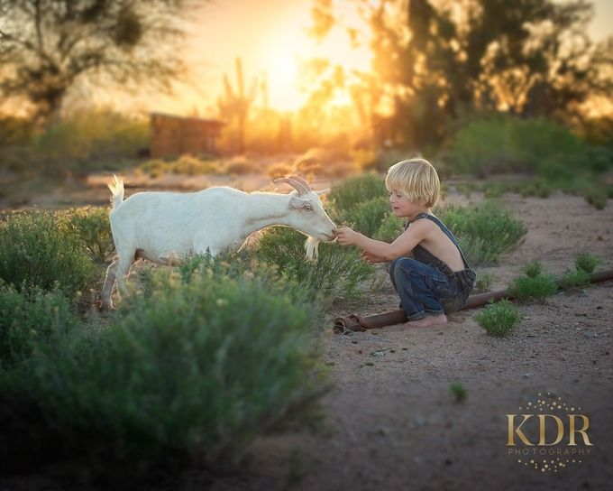 Little Jake Had a Farm by KDRphotography - Farms And Barns Animals Photo Contest