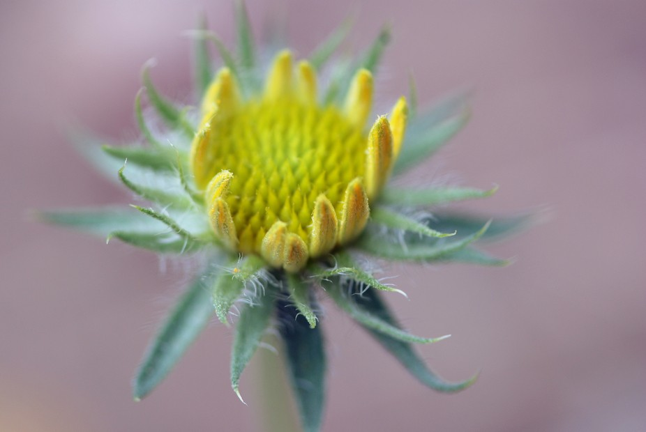 When I had my Nikon D80, I rented a macro lens and performed some tests with it. Most of the pict...