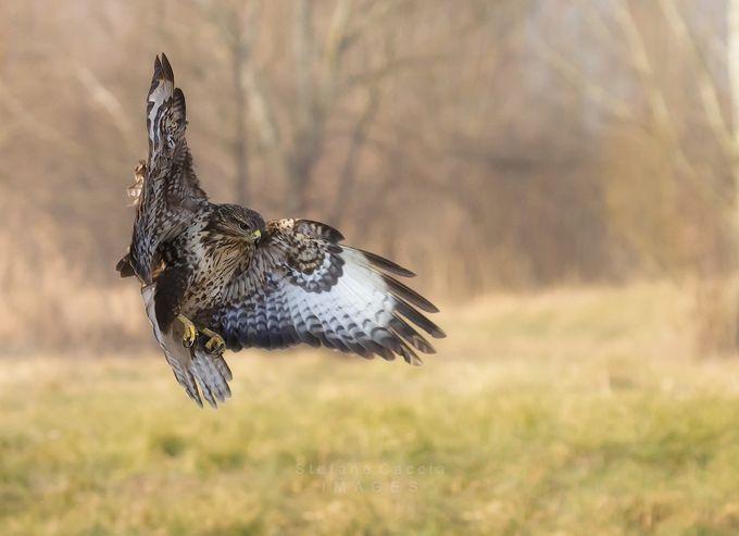 Flutter & float by stephenhunt - Wildlife Photo Contest 2017
