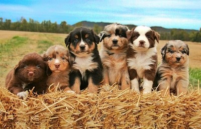 What's cuter than a whole litter of perfectly posed pups??