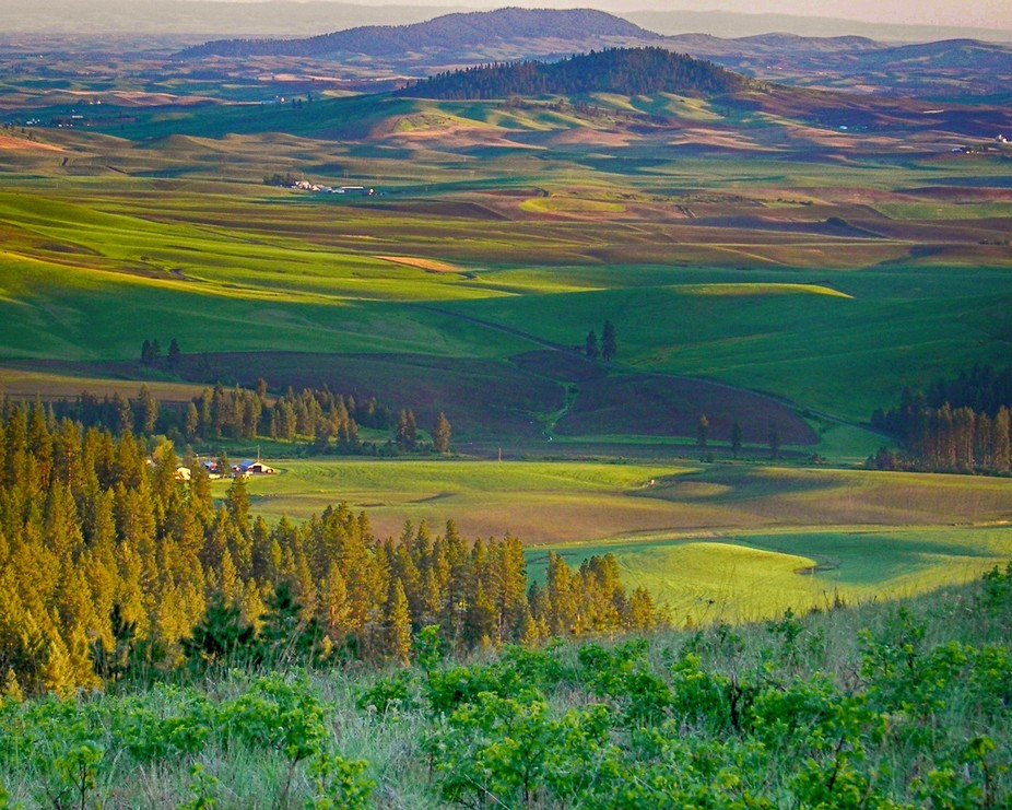 A late afternoon view of the Palouse from a spot near Fairfield, Washington
