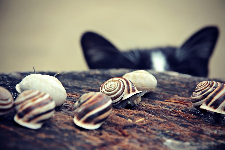 Cat Snails