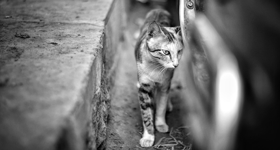 A cat walks through and i was happened to capture it!