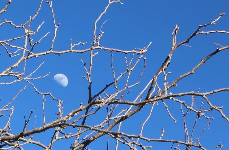 During an afternoon walkabout in town, I saw the moon (just before the partial eclipse in 2017). ...