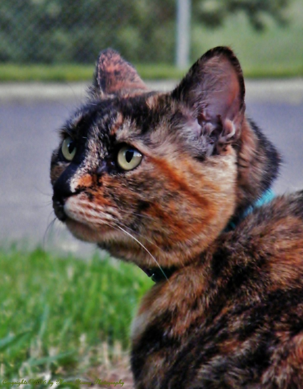 Thinking Kitty