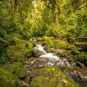 A river flowing through the forest at Cerro Dantas Wildlife Reserve in Costa Rica