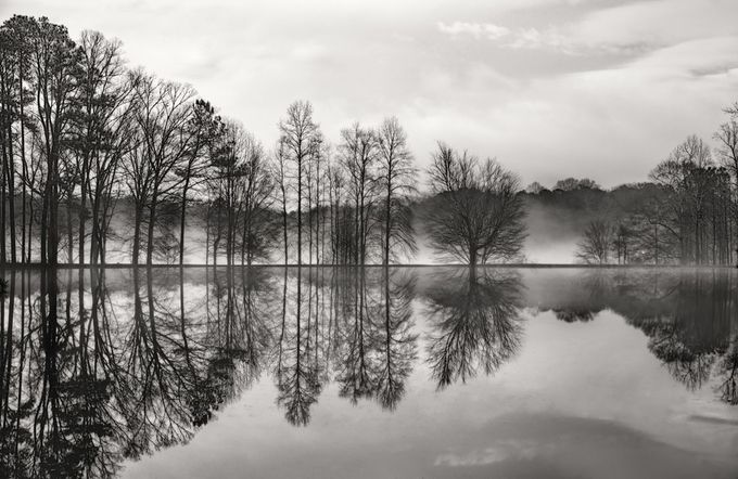 Reflections in Black and White by GloriaMatyszyk - Tree Silhouettes Photo Contest