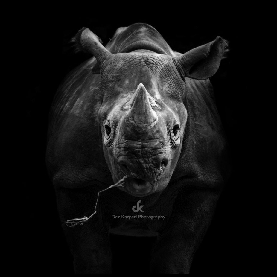 The Dark Side of Animals - Rhino by dezkarpatiphotography - Animals In Black And White Photo Contest