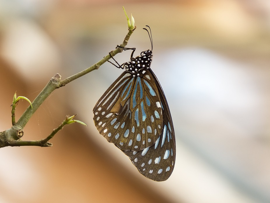Captured in Luang Prabang, Laos