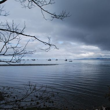Herring season on the Salish Sea, the Strait of Georgia - Morning of March 5, 2017 in Parksville Park
