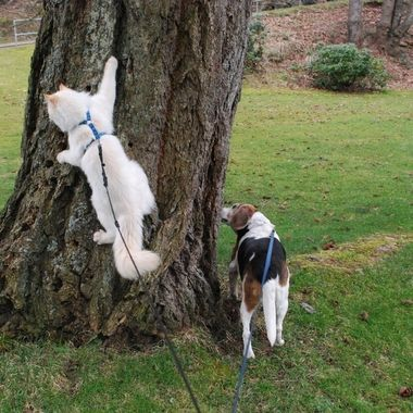 Maggs & Trip out for a walk, sniff, climb & peet - at the Parksville Park 9 March 2017