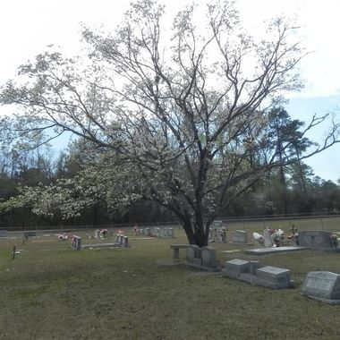 Bethel Cemetery, just outside of Pooler, GA