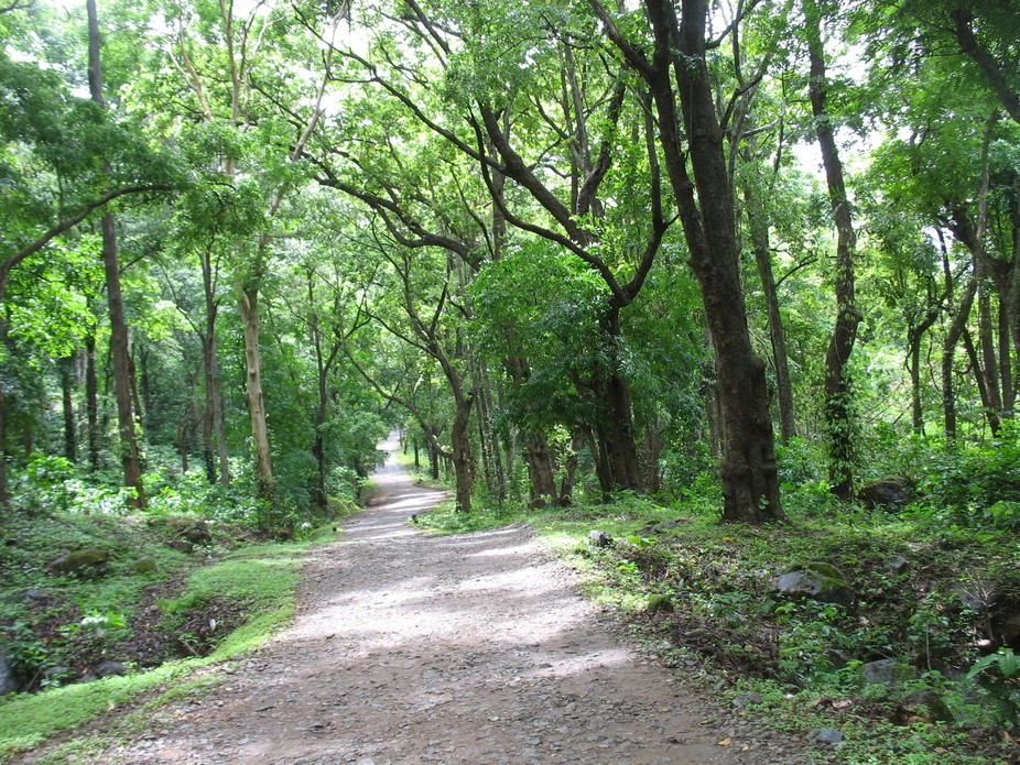 Road inside the Deep Forest