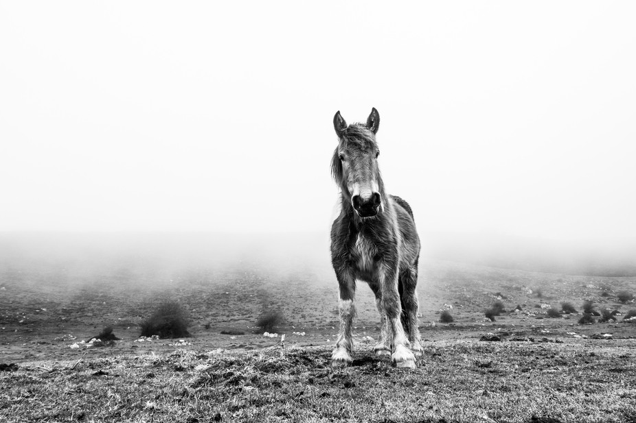 I was lucky to find this wild horse in the middle of the fog. I could keep close to him for an in...