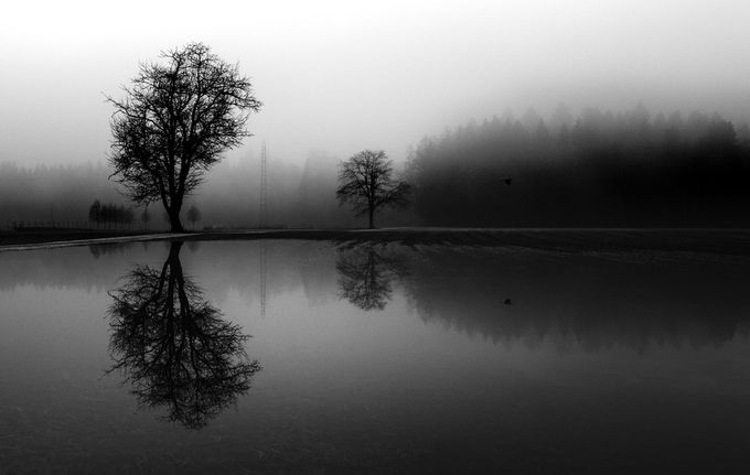 Trees and a bird by alekrivec - Show Minimalism Photo Contest