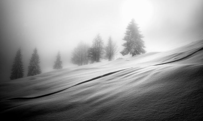 Winter In Black And White Photo Contest Winners