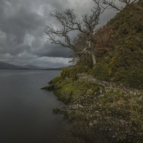 A single Tree hanging on the edge of Loch Lomond, part of the Trossachs National Park in Scotland.