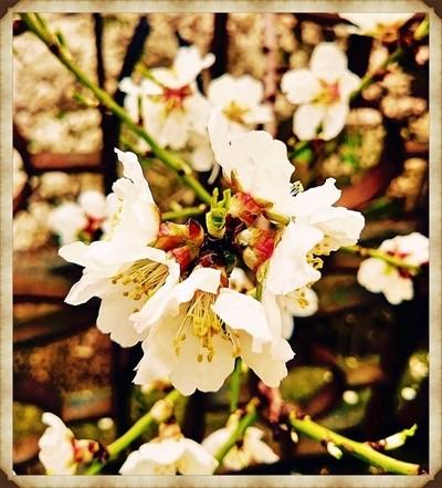 flowering period_